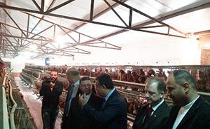 وزير القوى العاملة ورئيس جامعة بنها يتفقدان مزارع الأرانب والدواجن بزراعة مشتهر