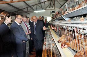 سفير بلجيكا لدى القاهرة يشيد بمشروعات الثروة الحيوانية بجامعة بنها