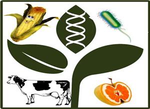 40 باحث دولي بالمؤتمر الدولي الثالث لتطبيقات التقنية الحيوية فى الزراعة