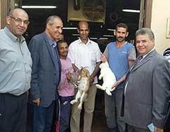 رئيس جامعة بنها يتفقد مشروع الإستزراع السمكى ومزارع الإنتاج الحيوانى بزراعة مشتهر خلال أجازة العيد